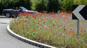 wildflowers on a roundabout